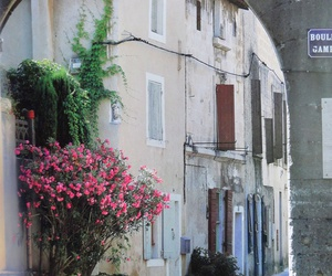 flowers, france, and st-remy de provence image