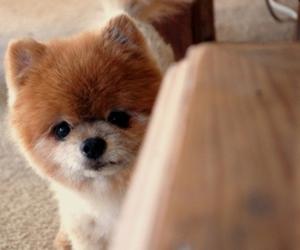 dog, pupply, and cute image