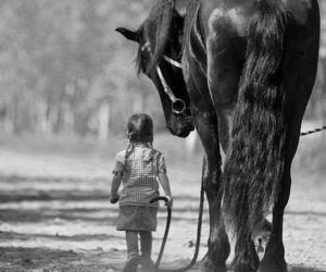 horse, animal, and black image