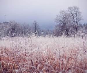 cold, frost, and nature image
