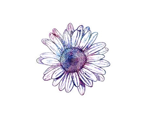 Dream, flower, and overlay image