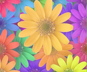 flowers, background, and pastel image