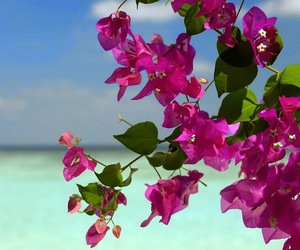 flowers, sea, and beautiful image