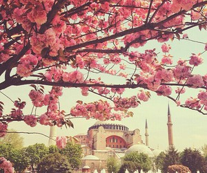 flowers, istanbul, and city image