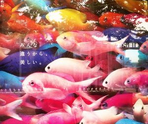 fish and colorful image