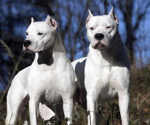 dogs, pets, and white image