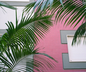 pink, plants, and green image