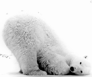 ?, animal, and artic image