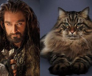 richard armitage, the hobbit, and thorin image