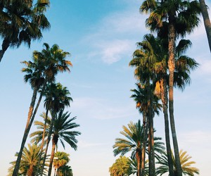 palms, palm trees, and tropical image