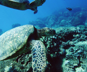 beach, snorkling, and turtle image