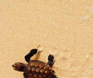 turtle, sand, and animal image