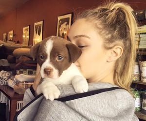 gigi hadid, model, and puppy image
