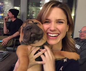 aw, chicago fire, and puppy image