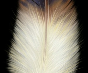 background, feather, and wallpaper image
