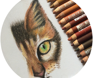 drawing, animal, and cat image