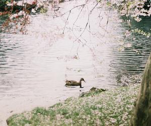 bird, blossom, and blossoms image