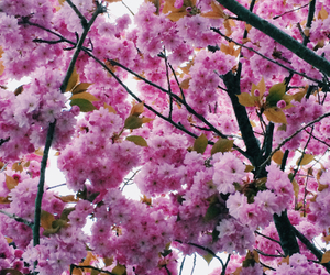 beautiful, blossom, and flowers image