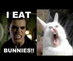 bunny, funny, and lol image