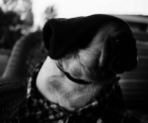 dog, cute, and hipster image
