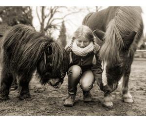horse, pony, and shetland image