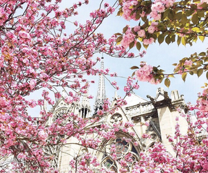 flowers, paris, and love image