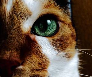 cat, animals, and eyes image