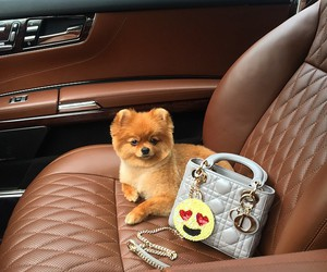 cute, dog, and luxury image
