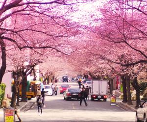 pink, south korea, and busan image