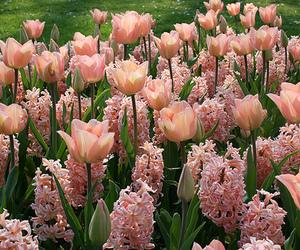 beautiful, environment, and pink image
