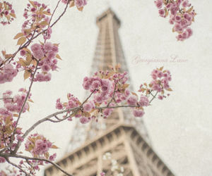 paris, flowers, and spring image