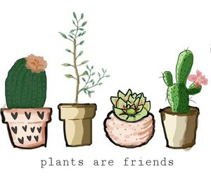 cactus, green, and illustration image