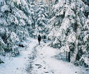 forest, travel, and winter image