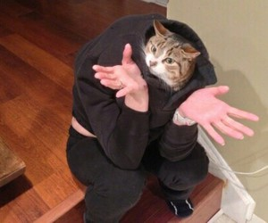 cat, funny, and wtf image