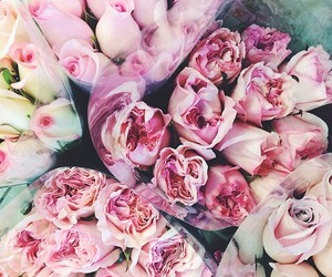 tumblr and colourful roses image