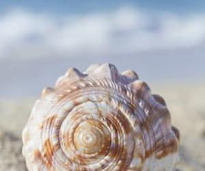 photography, seashells, and summer image