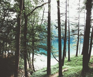 forest, beautiful, and landscape image