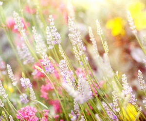 background, bokeh, and colorful image