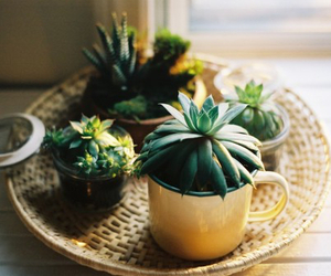 cactus, home, and nature image