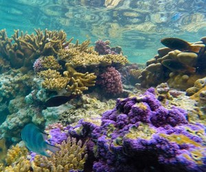 coral, coral reef, and nature image