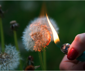fire, dandelion, and flowers image