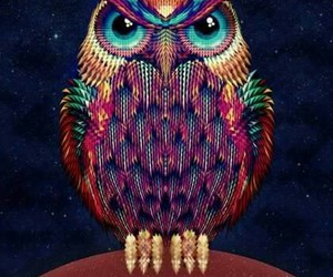 owl, bird, and colors image