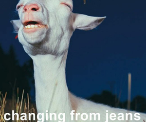jeans, funny, and goat image