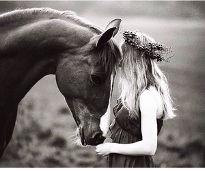 beautiful, horse, and friends image