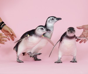 penguin, pink, and animal image