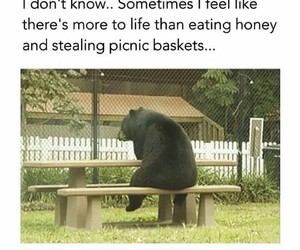 bear and funny image