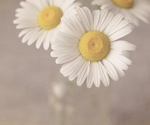 flowers, cute, and fondos para iphone image