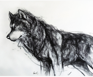 art, black and white, and wolf image