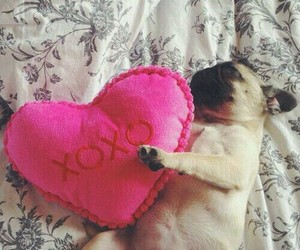 dog, heart, and pink image
