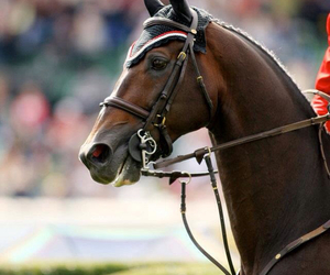 beautiful, thoroughbred, and race horse image
